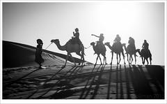 Sahara traffic jam (erikoo) Tags: sahara desert camel morocco maroc driver nomad marokko dromedaris merzouga woestijn ergchebbi marokkomarocmorocco2015
