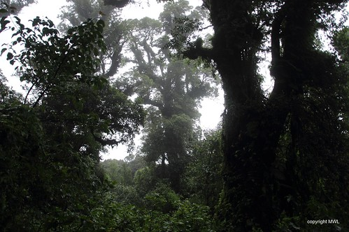 Chiang Mai forest