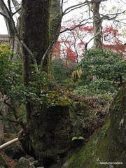 PB220916 (takafumionodera) Tags: japan olympus hakone omd em1   goura