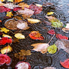 Leaves in a Puddle (Reinardina) Tags: autumn fall colors leaves rain weather puddle movement colours floating ripples downpour cliché submersed theelements