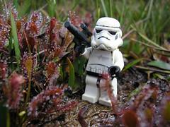 Planeta Drosera (Krabl) Tags: storm trooper star lego wars minifigures