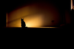 the sun goes down (stocks photography.) Tags: black cat photography feline photographer pussy stocks thesungoesdown stocksphotography michaelmarsh