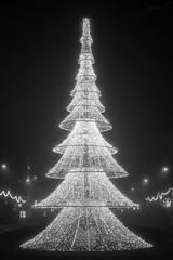 Mist V (ALX-PHOTOGRAPHIE) Tags: christmas light bw mist tree fog night noir december nb nol soir nuit arbre blanc brouillard dcembre myst angers