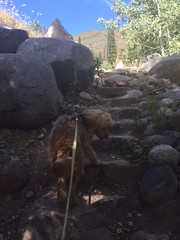 bella-loves-hiking-with-her-family_22756498784_o