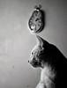 1,10 (aprox) (carlosdeteis.foto) Tags: carlosdeteis galiza galicia cats gatos jatos
