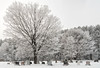 'Grave Concern' (Canadapt) Tags: graveyard cemetery tree hoar frost gravestones forest snow winter almostblackandwhite canadapt