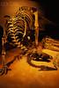 IH208678 (agathaumas) Tags: animals bones dinosaur display fossil greatlakesstates midwest minnesota museum museumexhibit naturalscience naturalsciences nobody northamerica paleontology physicalscience preservation ramseycounty science sciencemuseumofminnesota sciences skeleton stpaul twincities usa