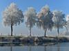 Spiegelung (Pixelkids) Tags: winter bayern deutschland rauhreif frost weiher birken