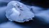 Eisige Temperaturen (Gerosas) Tags: eis frost januar rems stihlgalerie waiblingen winter langzeitbelichtung stein gefroren fliessen blau kalt makroplanart2100 zeiss wildbach wasser
