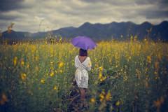 Thailand (♥siebe ©) Tags: outdoor woman landscape field landschap scenery thai thailand ประเทศไทย เมืองไทย ไทย 2017 ผู้หญิง flowers umbrella purple