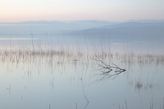Lake (Massimo_Discepoli) Tags: water reflections minimalism landscape beautiful delicate umbria italy trasimeno