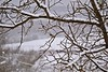 One sparrow in a frosty morning (Zsofia Nagy) Tags: winter tree trees sparrow bird branches garden snow d3100 depthoffield dof outdoor