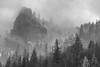 Trees and Mist, Yosemite (Chemophilic) Tags: landscape yosemite 5014 summilux siverefex bw monochrom