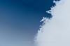 星が積もる朝に (zwei_kilo_gramm) Tags: sapporo december winter nature 冬 12月 マクロ ボケ snow 札幌 雪 自然 macro hokkaido snowflake 日本 bokeh そこらへん japan 北海道