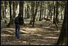The photograph (plcg.prod) Tags: espace rambouillet france deer cerf photographe photograph wood bois