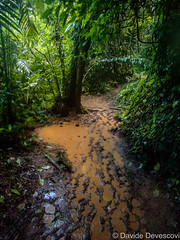 Mud and rain on the way back from the Crystal Cave (Deve82) Tags: americacentrale belize belmopan blueholenationalpark centralamerica afternoon fango forest foresta foreste forests landscape mud paesaggio pomeriggio pozzanghera pozzanghere puddle puddles