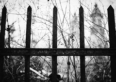 Imperial Bramble (ewitsoe) Tags: fence hff fencedfriday friday edition spikes weds winter monochrome blackandwhite cathedral church ewitsoe nikond80 35mm street urban city catholic happyfencefriday