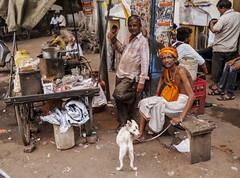 El sentimiento es mutuo (Nebelkuss) Tags: india gwalior shadu santón mercadillo market perritos dogs callejeras street fujixpro1 fujinonxf23f14 elzoohumano thehumanzoo mirada look