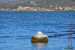 A-LUR_5604 (ornessina) Tags: trasimeno umbria byrd uccelli aironi cormorani toscana va orcia