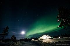 IMG_2928 (F@bione©) Tags: lapponia lapland marzo 2017 husky aurora boreale northenlight circolo polare artico rovagnemi finalndia finland
