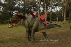 Stegosaurus Dinosaur (Anna Calvert Photography) Tags: trees nature gardens landscape dinosaur display statues australia canberra prehistoric stegosaurus canberrabotanicalgardens