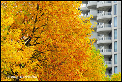 Fall Colour in Parking Lot - Richmond Centre N17476e (Harris Hui (in search of light)) Tags: autumn canada building fall leaves architecture vancouver gold nikon parkinglot pattern bc balcony richmond shoppingmall repetition layers juxtaposition layering d300 fallcolour richmondcentre sigma70200mmf28 autumngold architecturedetails nikonuser nikond300 harrishui vancouverdslrshooter