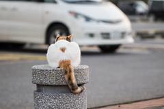 Cat (Taka_1974) Tags: cat homeless straycat