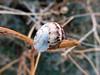 Snail (pefkosmad) Tags: sunset vacation holiday october sundown outdoor dusk hellas snail greece creature greekislands pefkos griechenland rodos rhodes dodecanese pefki pefkoi