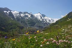 Grossglockner (EP Diederiks) Tags: schnee summer snow mountains flower berg austria sommer blumen carinthia glacier grossglockner pasterze karnten