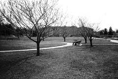 (christait) Tags: park street old canada man calgary bench sitting grain walker alberta pathway yyc bridgeland yycstreet