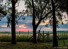 De vez en cuando la vida (horacio marin) Tags: patagonia nature argentina clouds landscape paisaje cielo nubes campo tranquera