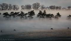 Horses in the Mist (Kyle_H2Os) Tags: morning trees horses mist silhouette fog frost