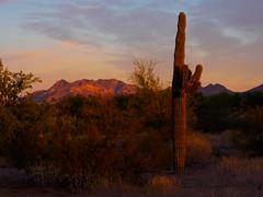 Superstition Mountain with Saguaro.jpg (melissaenderle) Tags: mountain desert cactus arizona