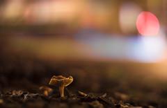 Dreamy Street Mushroom (::Lens a Lot::) Tags: nippon kogaku japan nikkors 55mm f12 1969 | 7 blades iris nikon bokeh mushroom depth field color vintage manual classic japanese fixed length prime lens night light profondeur de champ
