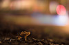 Dreamy Street Mushroom (::Lens a Lot::) Tags: nippon kogaku japan nikkors 55mm f12 1969   7 blades iris nikon bokeh mushroom depth field color vintage manual classic japanese fixed length prime lens night light profondeur de champ