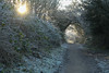 A Frosty Walk (jillyspoon) Tags: walk path frosty frost cold icy northyorkshire canon canon70d 70d winter 2017 january hedge hedgerow undergrowth foliage sunlight wintersun jackfrost passage pathway niddgorge bilton overhang arch nature nautral
