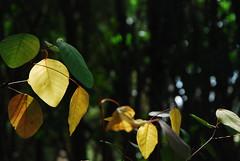 color pieces (Iglesias) Tags: color art field utata leaf leaves