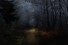 Entrance to the frozen forest (marcmayer) Tags: dunkel mystisch mystic dark mood forest wald frozen mist eis ice germany deutschland nikon d5200 nikkor 50mm f18