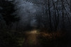 Entrance to the frozen forest (marcmayer) Tags: dunkel mystisch mystic dark mood forest wald frozen mist eis ice germany deutschland nikon d5200 nikkor 50mm f18