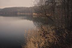 Silently Waiting (Netsrak (on/off)) Tags: liblarerseen see lake schilf reed reflection reflektion tree trees baum bäume untersee wald forst forest woods erftstadt nordrheinwestfalen deutschland de