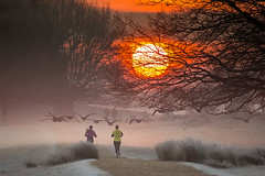 Richmond Park, London, UK (iesphotography) Tags: london richmondpark canon deer nature park photo richmond sunrise sunset wildlife