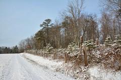 Ohio Winter Landscapes (thoeflich) Tags: snowscape snowylandscape ohio churchtown marietta snow