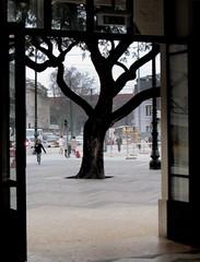 tronco emoldurado (Américo Meira) Tags: portugal lisboa caisdosodré porta moldura tronco ramo estação
