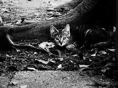 neko-neko1632 (kuro-gin) Tags: cat cats animal japan snap street straycat 猫 monochrome