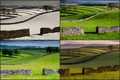 A Year in the Life (Peter Quinn1) Tags: derbyshire collage litton fields seasons winter summer spring autumn ayearinthelife peakdistrict drystonewalls limestone whitepeak cressbrookdale