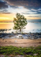 Lonely Tree (Ah Wei (Lung Wei)) Tags: 50mmf18g ahweilungwei clouds georgetown georgetownpenang karpalsinghdrive landscape lonelytree my malaysia nikon nikon50mmf18g nikond750 penang penangbridge penangisland persiarankarpalsingh pulaupinang seascape seashore shore sunrise sunrises tree