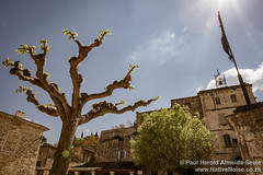Tree and Crucifix in Oppède le Vieux, Provence, France