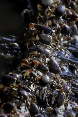 Crabs (Amanda L Brewer) Tags: ga georgia atlantic crabs nikkor jekyllisland waterway intercoastal 2015 18300mm nikond7200 amandalbrewer