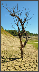 0455 guerledan (cbibi35) Tags: 22 lac bretagne sec arbre bzh cotedarmor guerledan lacdeguerledan