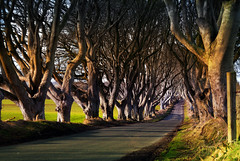 Branch road (Perkvats Havatkov) Tags: county ireland tree dark shade sunlit avenue northern hedges antrim lined xf1
